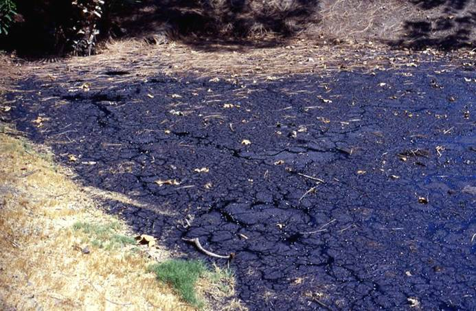 A history and the geology of la brea tar pits in california