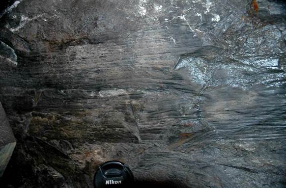 Fossil Logs Carbonized Compressions In Basal